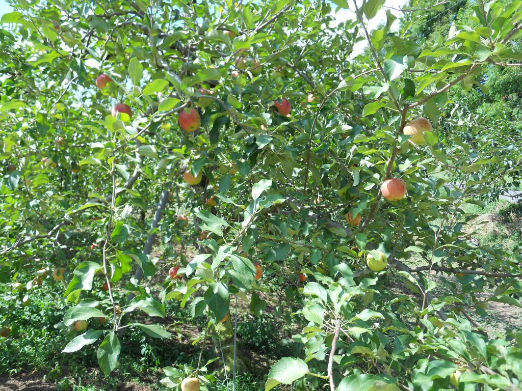 観光 ちょうど 平田 狩り 農園 とれたてフルーツが絶品!果物狩りや動物との触れ合いも楽しめる「平田観光農園」【広島県三次市】  